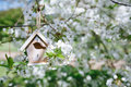 Little birdhouse in spring with blossom cherry flower sakura white Royalty Free Stock Photo
