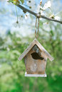 Little birdhouse in spring with blossom cherry flower sakura white Stock Photo