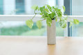 Little bonsai on the table near window Royalty Free Stock Photography