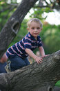 Little boy and big tree Stock Photo