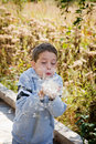 Little boy blowing plant seeds Royalty Free Stock Image