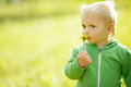 Little boy with dandelion Stock Photo
