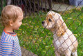 Little boy and dog behind fence Royalty Free Stock Images