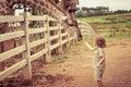 Little boy feeding a giraffe at the zoo Royalty Free Stock Photo