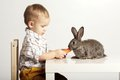 Little boy feeding rabbit with carrot small pretty Royalty Free Stock Photos
