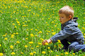 Little boy on the field of dandelions Royalty Free Stock Image