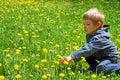 Little boy on the field of dandelions Royalty Free Stock Photo