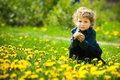 Little boy flowers field image has attached release Royalty Free Stock Photo