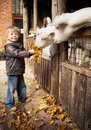Little Boy and Goats Stock Photos