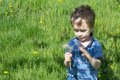 Little boy in green field with blow ball Stock Photography