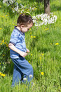 Little boy in green field with blow ball Stock Images