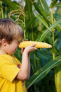 Little boy holding corn on his nose playing with sweet in the cornfield Royalty Free Stock Photos