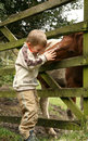 Little boy and horse Stock Photo