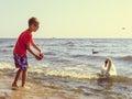 Little boy kid on beach have fun feeding swan. Royalty Free Stock Photo