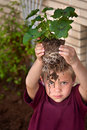 Little Boy Looking through Plant Roots Stock Photography