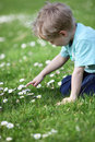 Little boy in a meadow Royalty Free Stock Photography