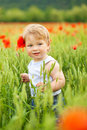 Little boy in poppy field Royalty Free Stock Images