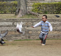 Little boy running among pigeons Royalty Free Stock Images