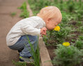 Little boy smelling flower in summer day Stock Photography