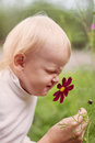Little boy smelling flower in summer day Royalty Free Stock Photo