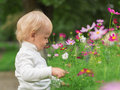 Little boy smelling flower in summer day Royalty Free Stock Photography