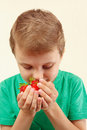 Little boy smelling handful of fresh ripe strawberries Royalty Free Stock Photo