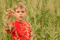 Little boy stands in high green grass Stock Image