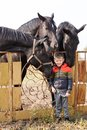A little boy stands near beautiful black horses. Outdoors. Royalty Free Stock Photo