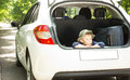 Little boy waiting with his luggage in the back of a hatchback car its boot open ready to depart on summer holiday Stock Photos