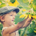 Little boy wearing green cap standing in sunflowers Stock Image