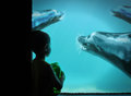Little boy at zoo with sea lions in water a young is looking swimming a blue tank underwater a Stock Photos