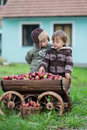 Little boys with a trolley full of apples in village path Stock Image