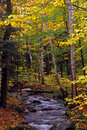 Little Brook with Fall Colors Royalty Free Stock Image
