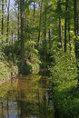 Little brook in Lower Saxony, Germany Royalty Free Stock Images