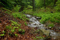 Little brook with rocks and stump wood in forest covered by moss Stock Photography