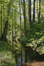 Little brook in spring, Germany Stock Photos