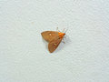 Little Brown and Orange Color Butterfly on the Rough White Wall Royalty Free Stock Photo