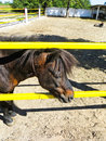 Little Brown Pony At Ranch