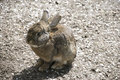 Little brown rabbit sitting cute Royalty Free Stock Photography