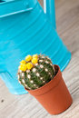Little Cactus plant Royalty Free Stock Photography