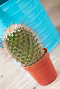 Little Cactus plant Stock Photos