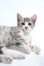 Little cat Stock Images