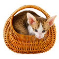 Little cat in basket Stock Photography