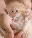 Little cat in people hands Royalty Free Stock Photo