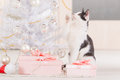 Little cat playing with Christmas tree ornaments Royalty Free Stock Photo