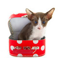 Little cat in red suitcase Royalty Free Stock Photography