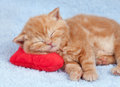Little cat sleeping on the pillow red heart shaped Royalty Free Stock Photography