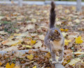 Little cat walk into park autenum Royalty Free Stock Photography