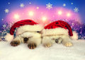 Little cats wearing santa hats two sleeping cat a hat Royalty Free Stock Photos