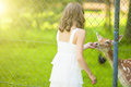 Little caucasian girl feeding roe behind fence vertical image Royalty Free Stock Photo